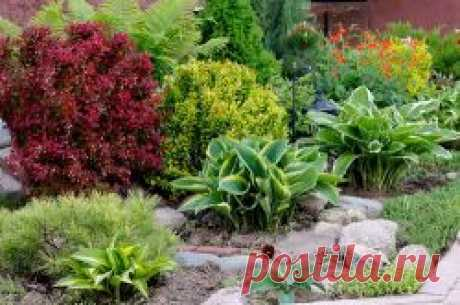 Secrets of successful design of a garden: we use hosts for ornament