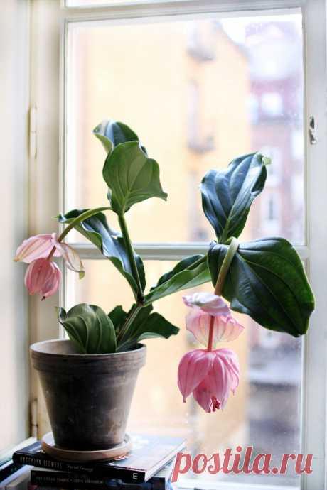 Самые модные комнатные растения этой осени | ELLE Decoration