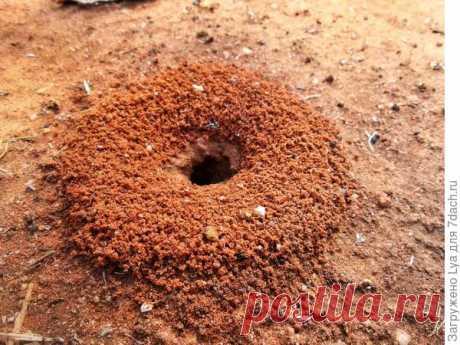 Муравьи: эффективные методы борьбы с муравьями