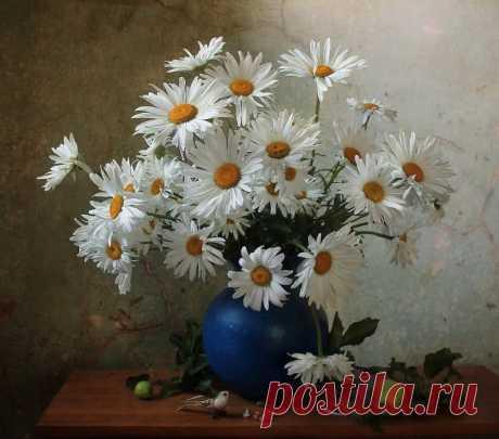 Ромашки на фото Марины Филатовой
