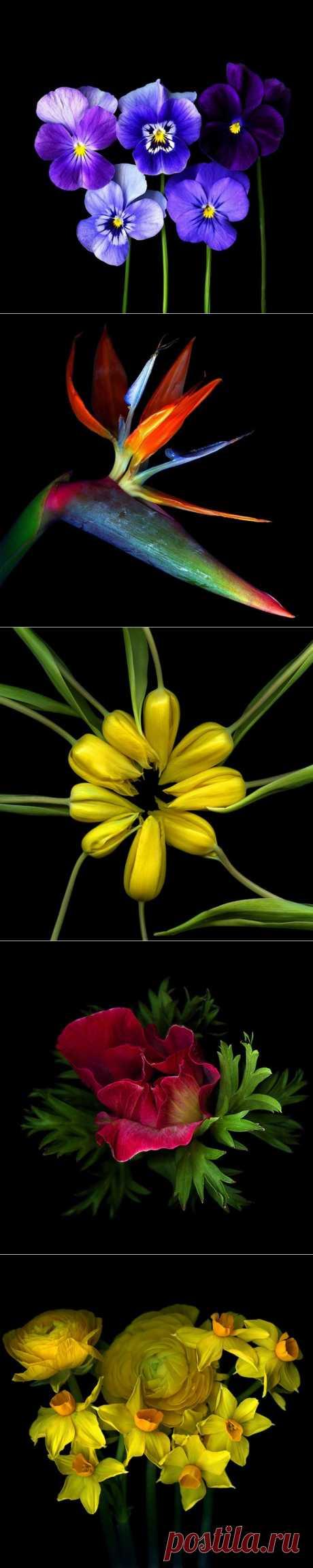 Цветы от фотографа Magda Indigo.