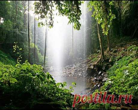 Дождевые леса Австралии. » Красота Жизни