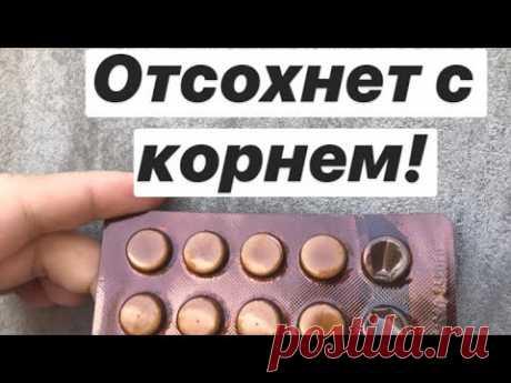 ГРИБОК НОГТЕЙ: Простые и Дешёвые способы избавиться от грибка на ногтях