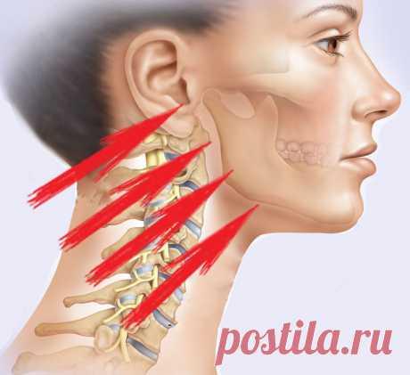 КРИК: Упражнение, которое вернет молодость лицу «Ревитоника» — это система приемов, направленная на запуск процесса естествественного омоложения организма, путем восстановления нарушенных его функций. В результате регулярных занятий фитнесом для лица и шеи, проведению лимфатического массажа, выравнивается баланс передней и задней части тела, нормализуется лимфооток, расслабляются и растягиваются ранее зажатые мышцы, что приводит к подтяжке, восстановлению овала лица, исчез...