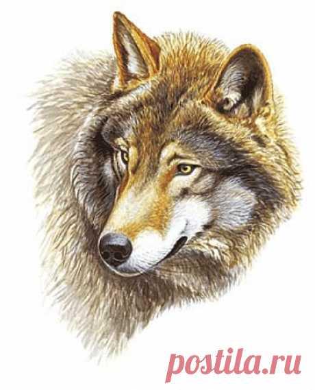 Схема вышивки «Волк» - Вышивка крестом
