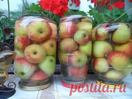 APPLES SOAKED - THE SIMPLEST RECIPE! \u000d\u000aStrong apples, it is desirable to put late winter grades in 3-liter banks to fill in with cold water, to fill 3 spoons of salt, 3 spoons of sugar, to put couple of laurel leaves, it is possible a gvozdichka. \u000d\u000aTo close covers and it is good to shake that salt and sugar were dissolved. To leave for a week at the room temperature, and then to carry away to the cold cellar. \u000d\u000aIn a month apples are ready, it is possible to store all winter, till spring.
