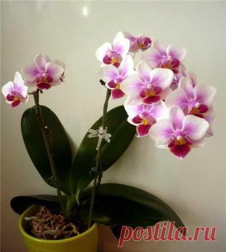 Орхидея по фэн шуй: значение и тайный смысл Орхидея - прекрасный цветок с множеством удивительных свойств. Как правильно разместить орхидею в жилище, чтобы она вам помогала.