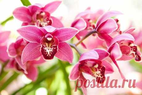 Причины высыхания и выглядывания из горшка корней у орхидей и что с этим можно сделать | Азбука огородника | Яндекс Дзен