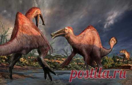 Дейнохейрус: Тёплый, мягкий и пушистый динозавр. Смесь медведя, утконоса и верблюда из мелового периода. | Рекомендательная система Пульс Mail.ru