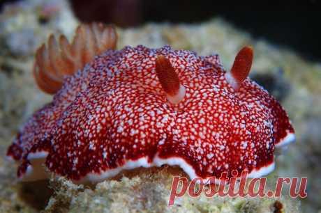 Удивительная красота морских моллюсков