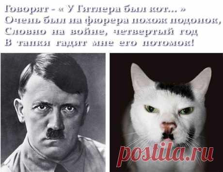 Приколы про котов (смешные фото с надписями анекдотов)
