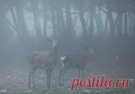 Πάρνηθα: Ελάφια στην ομίχλη - 10 φωτογραφίες βγαλμένες από τα παραμύθια