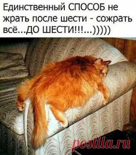 El gato rojo