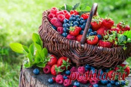 13 самых полезных осенних ягод