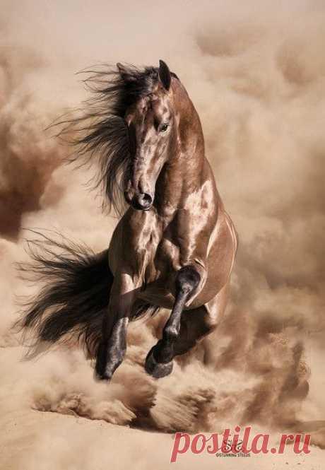 Очарование лошади