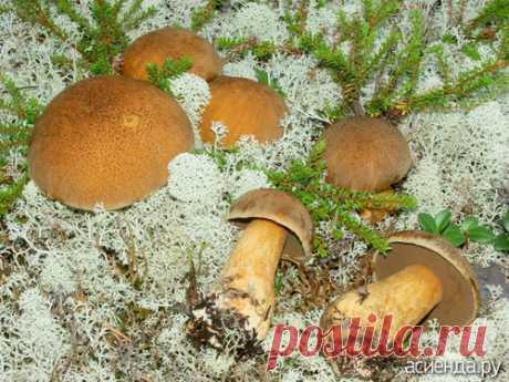 А в этом году я пока без грибов.: Дневник пользователя kira swetlowa