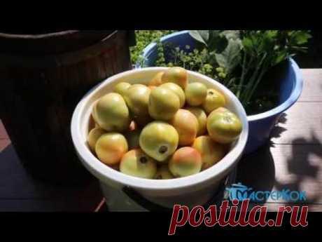 Квашеные помидоры бочковые. Супер рецепт вкусных квашенных помидоров