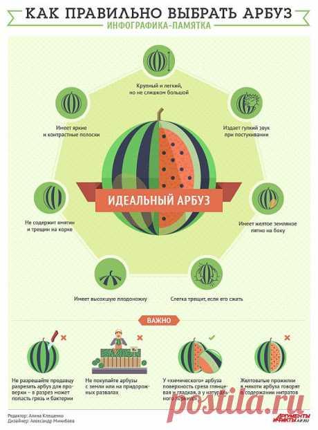 Как правильно выбрать арбуз. Инфографика-памятка - Вопрос-ответ - Аргументы и Факты