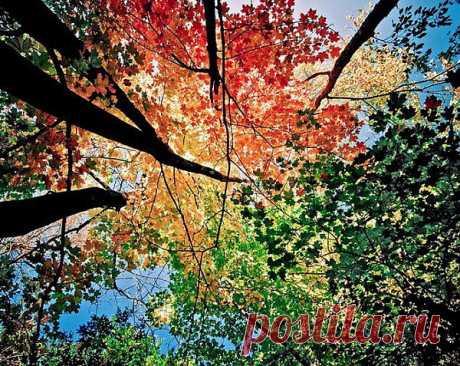 Яркий осенний лес (12 фото)