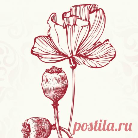 Купить Маковое масло по Лучшей Цене | Здоровое Питание Самые низкие цены на Маковое масло | Отзывы | Доставка в любую точку Украины | Магазин Здорового Питания | +380 (68) 432-35-54 приём заказов