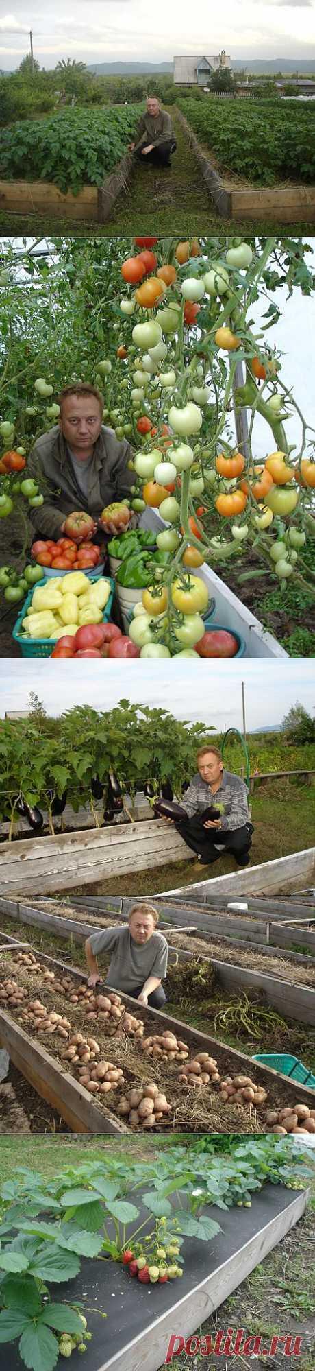 По просьбе многих моих друзей расскажу вам, как я выращиваю овощи. Таким способом уже садят многие дачники. Постараюсь вам объяснить. Я работаю, поэтому на дачный участок могу выезжать только на выходных. При этом надо отдохнуть после трудовой недели, покушать шашлык, попариться в бане, ну и маленько потрудиться на земле.  Каждый год весной, приезжая на свой дачный участок, мы сеем или высаживаем овощи на свои грядки. Размер грядки шириной от 1,4 метра до 2 метров, дорожки между ними от 20 см.