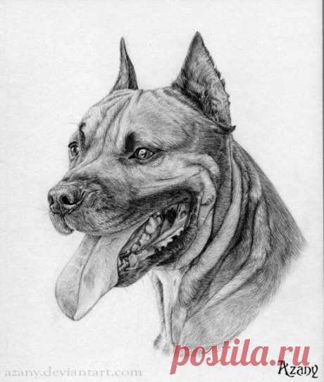 Рисуем очень суровую собаку простым карандашом
