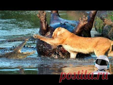 10 MAD FIGHTS of the ANIMALS FILMED WITH CAMERA \/ PART 4