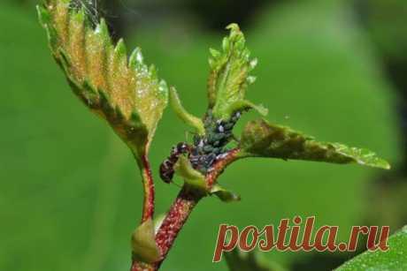 Когда друг оказался вдруг – 7 причин избавиться от муравьев в саду и огороде | Люблю Себя