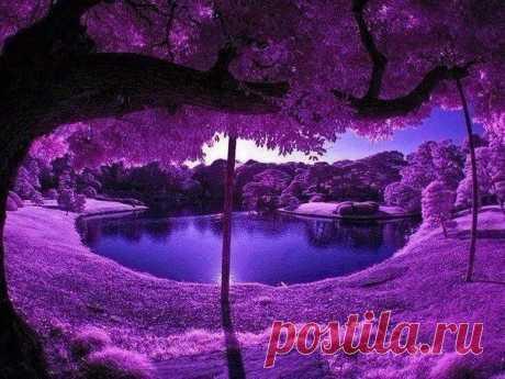 Сад в Японии
