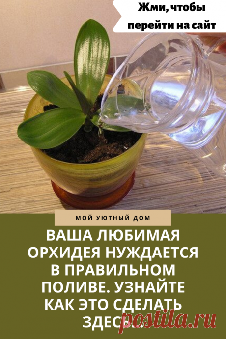 Как правильно поливать орхидею, чтобы она пышно цвела