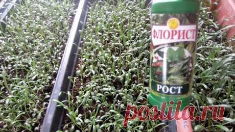 Схема №1 для использование удобрения при выращивании петунии и других цветов!