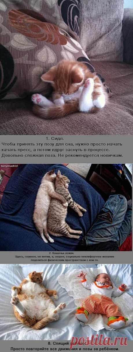 (+1) сообщ - Позы спящих котов - улетные картинки | Улетные картинки
