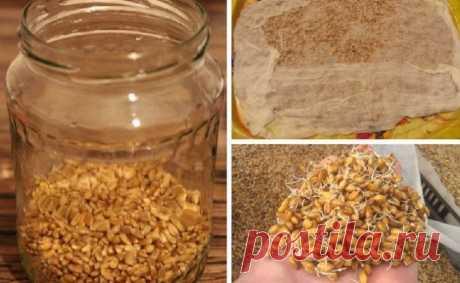 Самогон из пшеницы без дрожжей: рецепты приготовления браги в домашних условиях, как сделать без проращивания, сколько раз можно и как поставить брагу