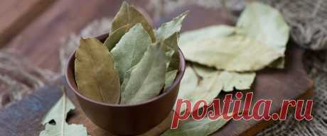 Лавровый лист: лечебные свойства и противопоказания.  Из этого материала вы узнаете всё о лавровом листе. Лечебные свойства лаврового листа, как выглядит и чем полезен лавровый лист, а также многое другое.