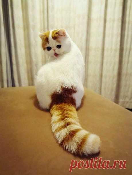 Кот Снуппи.Живет в Китае.