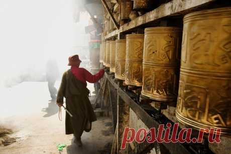 Тибетский гороскоп по году рождения: кто вы — Птица, Змея или Дракон (и что это значит)   Marie Claire Russia   Яндекс Дзен