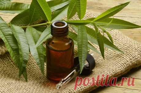 ༺🌸༻ Масло чайного дерева. Преимущества, польза и вред