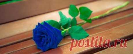 Голубая роза Цветок Неба символ вечности тайны и огня Знакомьтесь с удивительным цветком голубой розы, который не только необыкновенен для взора, но и удивляет своими качествами и историей. Голубая роза
