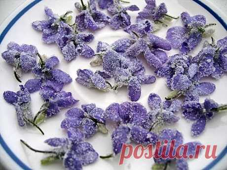 Сладкие цветы для десертов и выпечки. Как засахарить цветы.