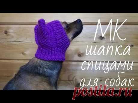 #МК Шапка спицами с ушками для #СОБАКИ или кошки