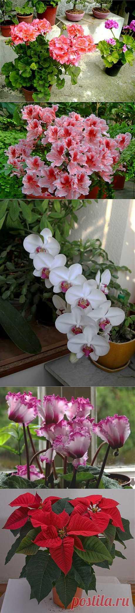 Стимулируем цветение комнатных растений.