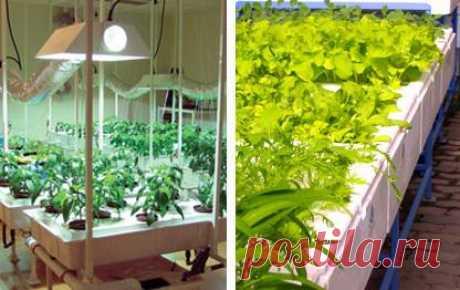 Что же лучше: традиционное огородничестро или гидропоника?
