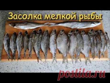 Засолка Рыбы. Выпуск №242