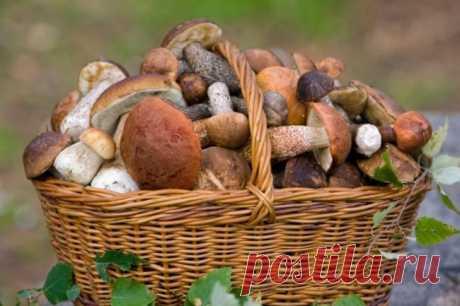 Какие грибы растут в июне: названия, фото, описание съедобных, где собирают, видео