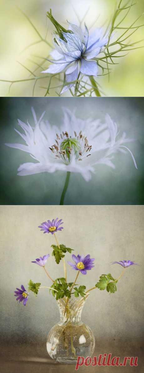 Удивительно нежные работы фотографа Мэнди Дишер..