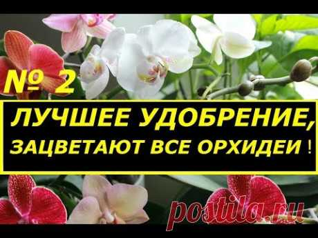 FROM THIS FERTILIZER ALL ORCHIDS BLOSSOM! SUPER TOP DRESSING FOR FALENOPSISOV! CONTINUATION.