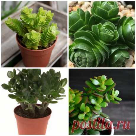 5 комнатных растений для декора интерьера, простых и неприхотливых в уходе | Интерьер Дизайн | Яндекс Дзен