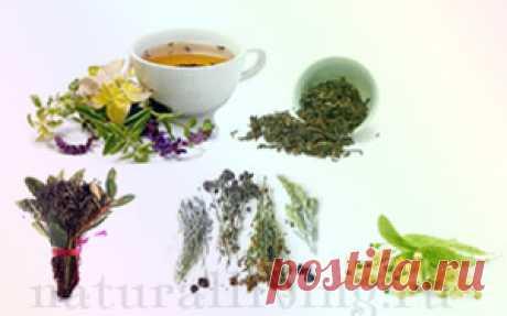 Травы и отвары для лица ухода за телом и роста волос и для чая. Народная медицина. Натуральный здоровый образ жизни