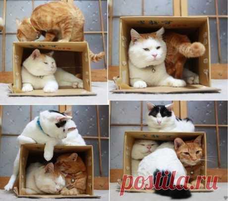 Ловушка для котов работает безотказно)