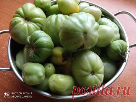 Квашеные зеленые помидоры — без них не обходится ни одно застолье, в магазине не купишь. Зимой хвалю себя за то, что приготовила | Блоггерство на пенсии | Яндекс Дзен